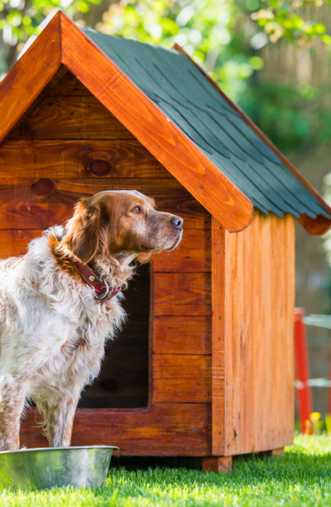 Try to create a classic snoopy dog house for your furry best friend! You will love these DIY dog house ideas!