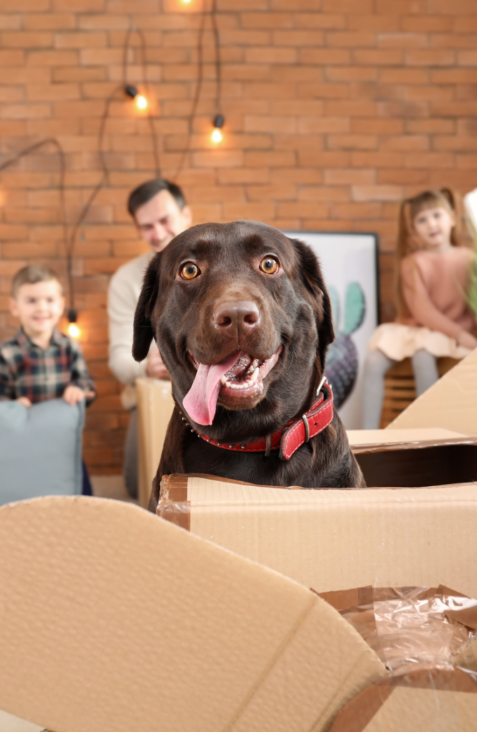 Don't underestimate cardboard when it comes to crafting! This DIY dog house is cheap, easy, and edible if your dog decides to chew.  You will love these DIY dog house ideas!