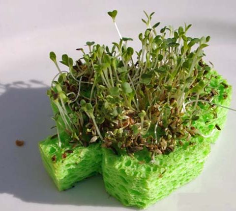 12 Weird Ways to Use A Kitchen Sponge| Uses for Kitchen Sponge, Kitchen Sponge Uses, Sponge Uses, Reuse, Repurpose, Repurpose Projects, Popular Pin #Sponge #Kitchen #SpongeUses